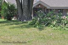 day after storm tree branches