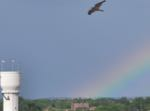osprey rainbow Brainerd tower