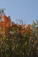 Fall colors Brainerd MN